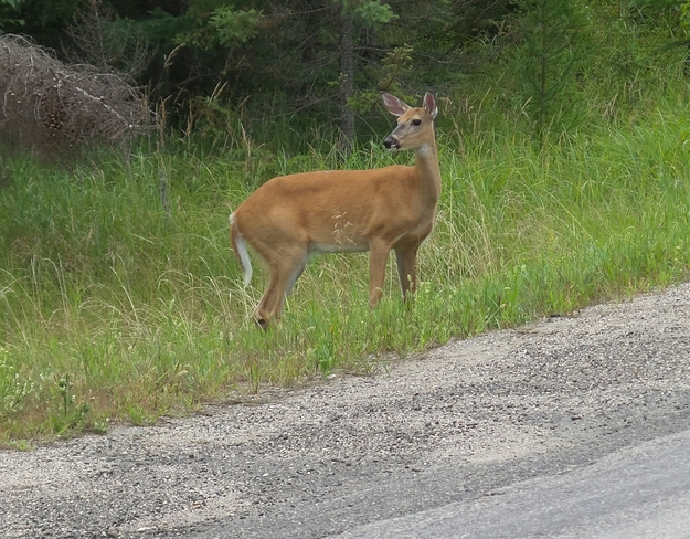Nice ride through the Whiteshell Park ,Manitoba Canada Unnamed Road, Oakbank, MB R0E, Canada