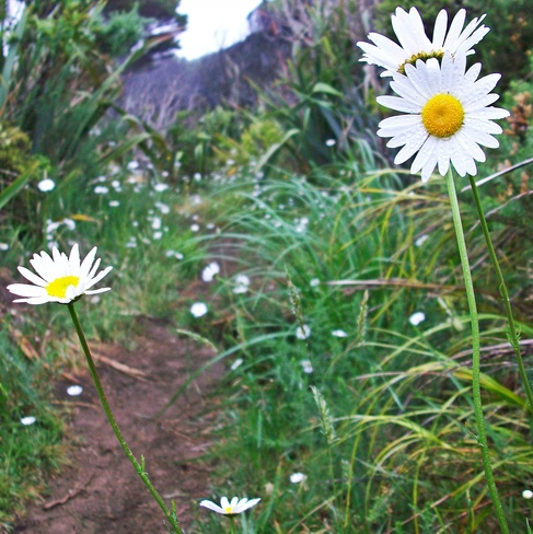 first time photos of flowers Akaroa, Canterbury, New Zealand