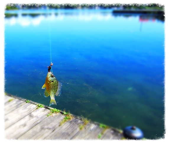 First fish of the day.... orillia on