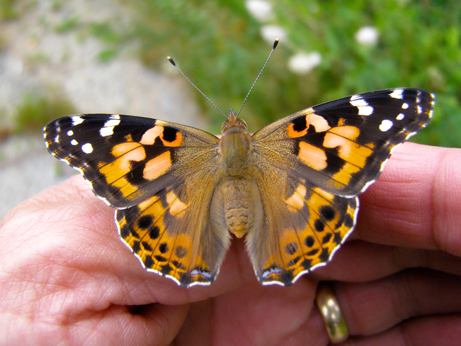 Butterfly! 74-120 Bourque Crescent, Wedgeport, NS B0W 3P0, Canada
