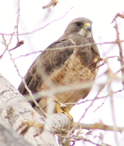 Newell County Hawks Lake Newell, Newell County No. 4, AB