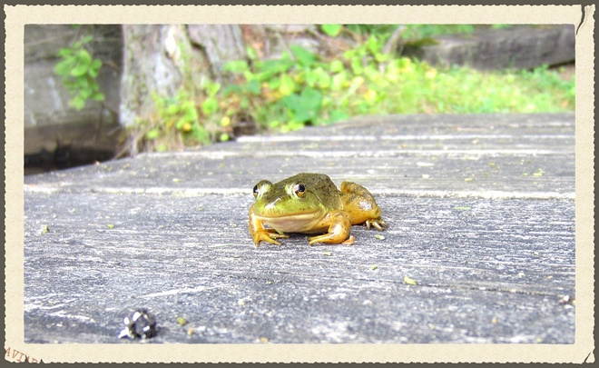 TWO FROGS Severn Bridge on