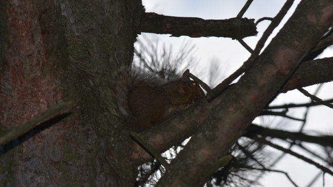 Little squirrel! St. Catharines, ON