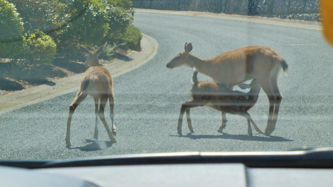 Stop the traffic, I'm hungry! Arbutus Ridge, Vancouver, BC