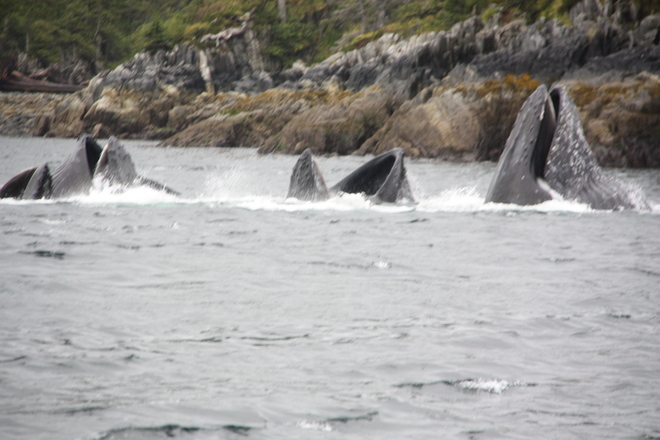 Whales Prince Rupert, BC