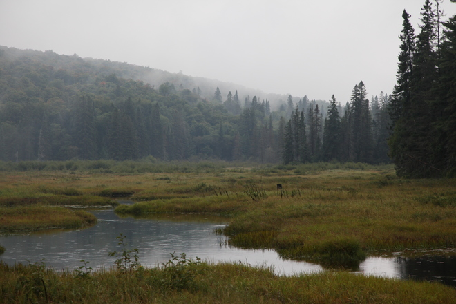 Foggy morning Algonquin Provincial Park, Nipissing District, ON