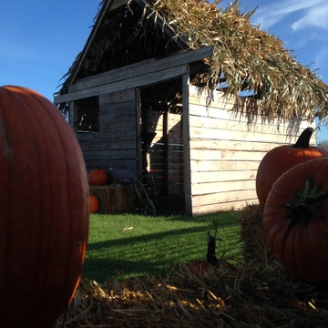 The Pumpkin Shack