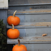 Three little pumpkins all in a row - Richard Trus