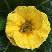 Rain soaked