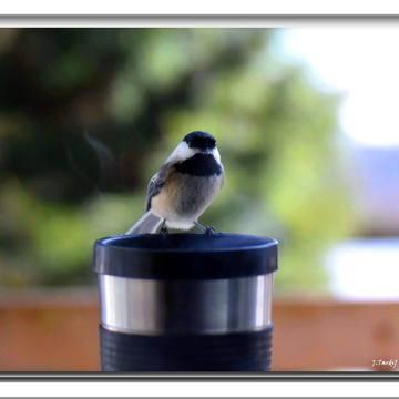Bon bon bon sur le mug à café maintenant!!..........