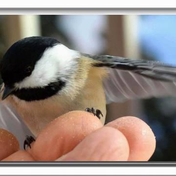 Petites miettes seulement mes ailes encore trop petites !!