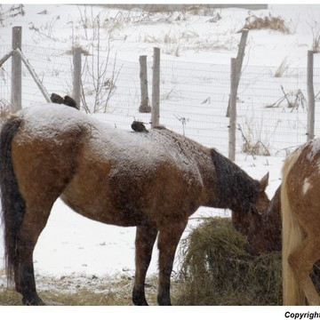 la vie d un moineau a dos de chevaux......sa rime bien