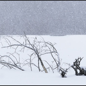 It's snowing, Elliot Lake.