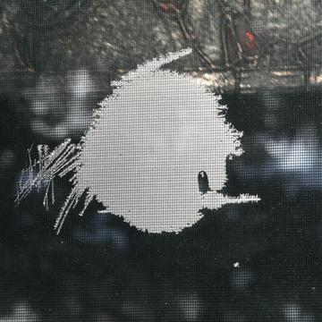 Angry Fish or Angry Bird?