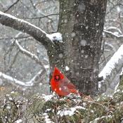 Sous la neige ce matin!