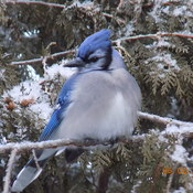 Magnifique oiseau ....
