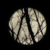 Peek a moon