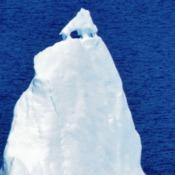 Dog Iceberg