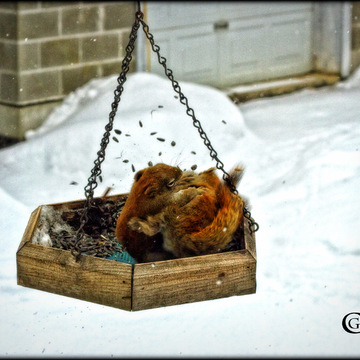 Fighting in the bird feeder.
