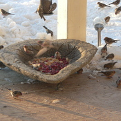 FRIENDS AT MY FEEDER