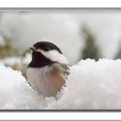 Pas facile avec la neige.................