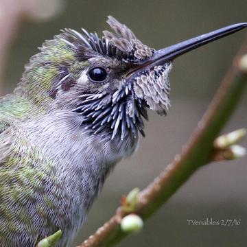Lizard Bird!!!