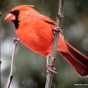 Mr. Cardinal!