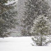 Quelle belle neige