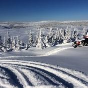 Moose Valley,Newfoundland
