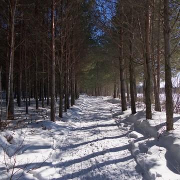 Un sentier de La Forêt Perdu - Notre-Dame du Mont-Ĉarmel