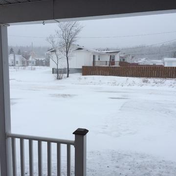 Snowing in Bishops Falls