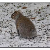 Écureuil bien particulier