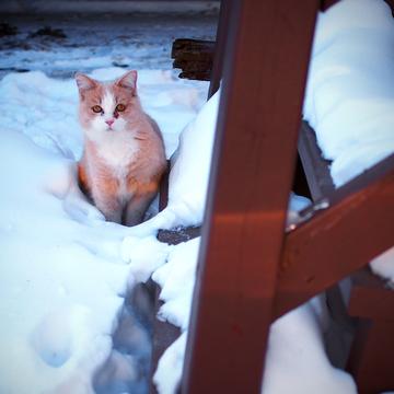 Garfield joue dehors