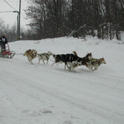 Seguin Ontario Sled Dog Mail Run