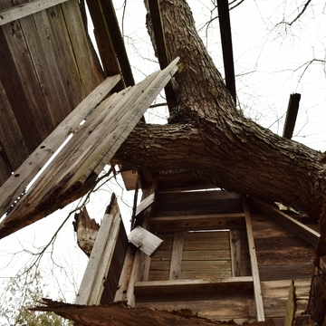upview of abandoned tree house