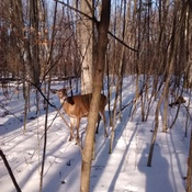 Beautiful deer at Lemoine Point Park in Kingston