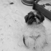 Can I Please Play in the Snow