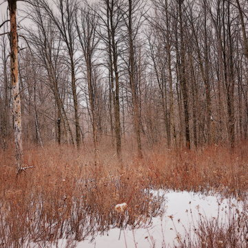 Une promenade dans les bois !