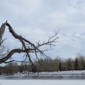 Dead Treehas life