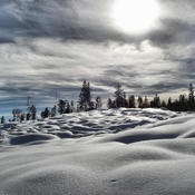 Larch Hills