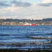 A visitor in the Comox Bay