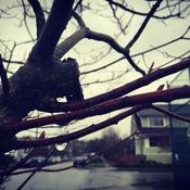 A TREE into YOGA Wednesdays