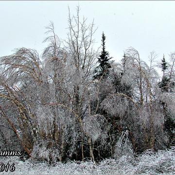 """""""Ice Trees"""""""
