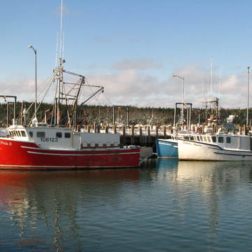 The Lobster boats