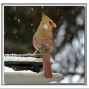 Sous la neige........