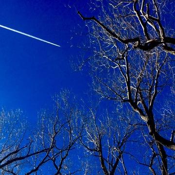 Sky Blue Flight