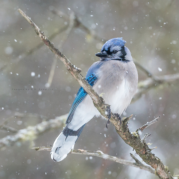 Snowy Saturday with The Blue Jays