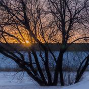 Soleil froid d'hiver