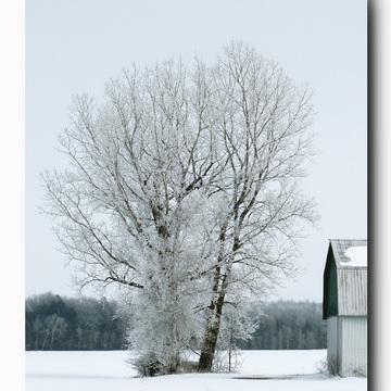Janvier tout blanc