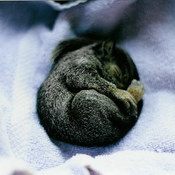 Baby squirrel My Dad found